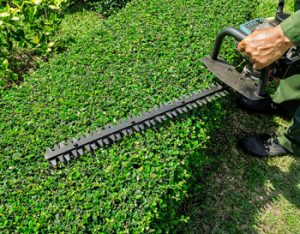 leaf Removal Rochester NY